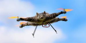 the interesting story behind the mysterious cat drone 300x151 - Drone Laws NZ For Drone Pilots & Operations 101 & 102 Rules